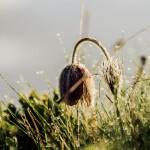 Ratko Photography
